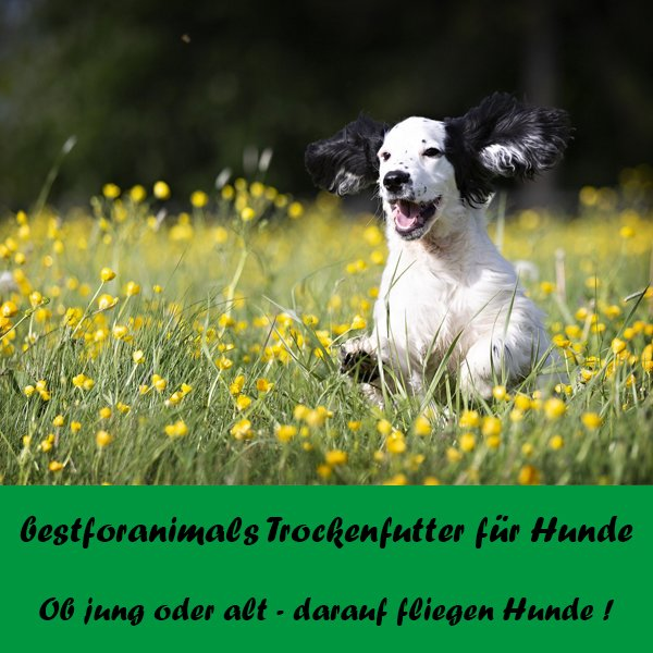 bestforanimals Trockenfutter für Hunde