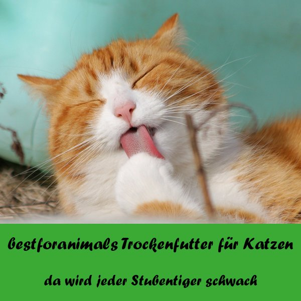 bestforanimals Trockenfutter für Katzen