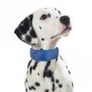 PROCYON Kühl-Bandana für Hunde M