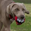 ROGZ FLUFFY GRINZ Hundeball, 7,8 cm rot
